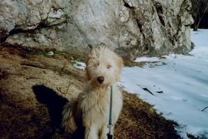 dec 2001 puppy